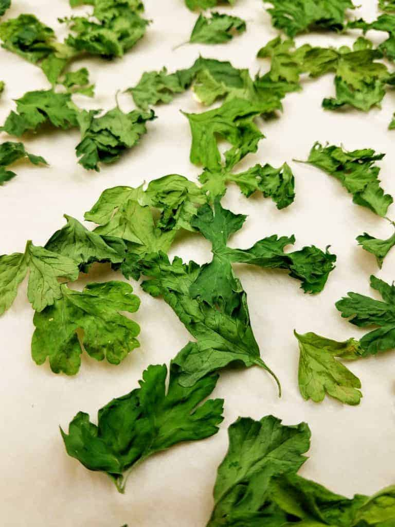 Dried parsley leaves on a parchment-lined baking sheet after coming out of the oven.